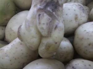 potato. . .sack